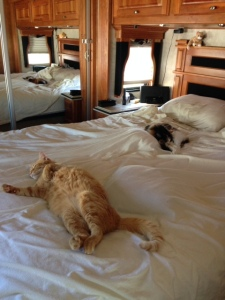 You can tell that our two fur balls are exhausted from our travels so far!
